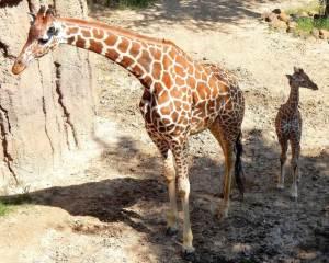 Kipenzi with her Mama